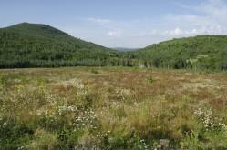 Blue Bell Mountain Landscape